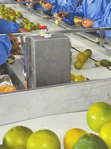 橘子白色食品皮带输送线