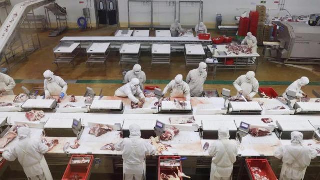 PU皮带线运猪肉有优势吗