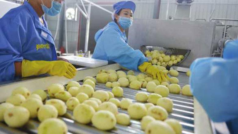 常州光良智能定制薯片生产线